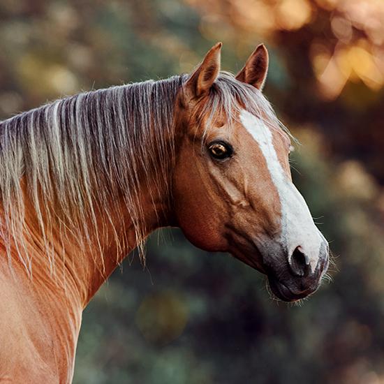main-chants-lucky-man-american-quarter-horse