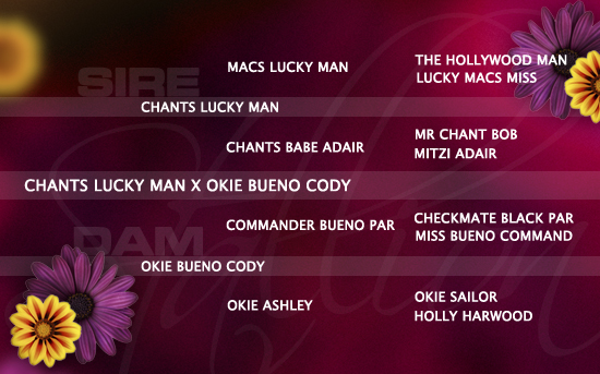 ped-nachzucht_chants-lucky-man-x-okie-bueno-cody