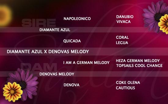 ped-nachzucht_diamante-azul-x-denovas-melody