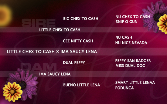 ped-nachzucht_little-chex-to-cash-x-ima-saucy-lena
