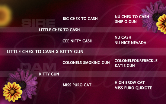 ped-nachzucht_little-chex-to-cash-x-kitty-gun