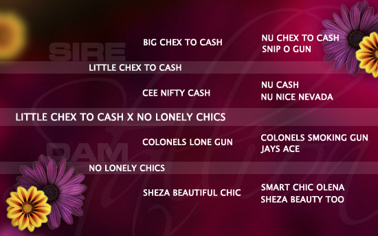 ped-nachzucht_little-chex-to-cash-x-no-lonely-chics