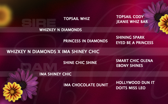 ped-nachzucht_whizkey-n-diamonds-x-ima-shiney-chic