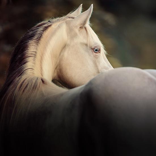 main-best-of-spook-american-quarter-horse2